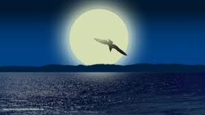 JLS Seagull