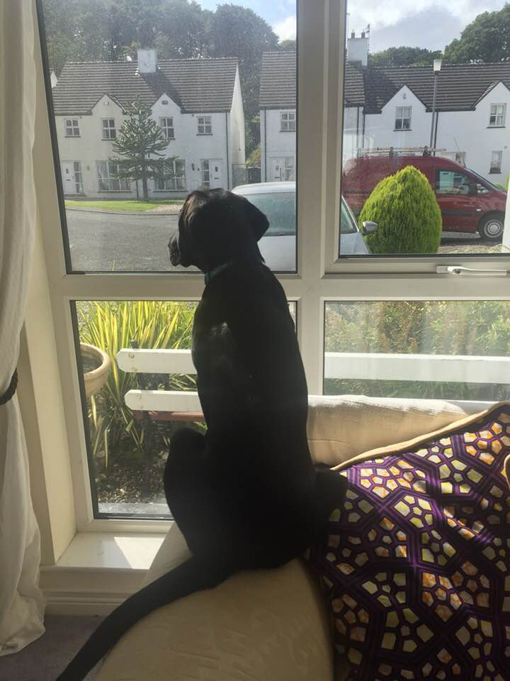 Jed at window