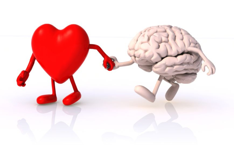 Heart-and-brain